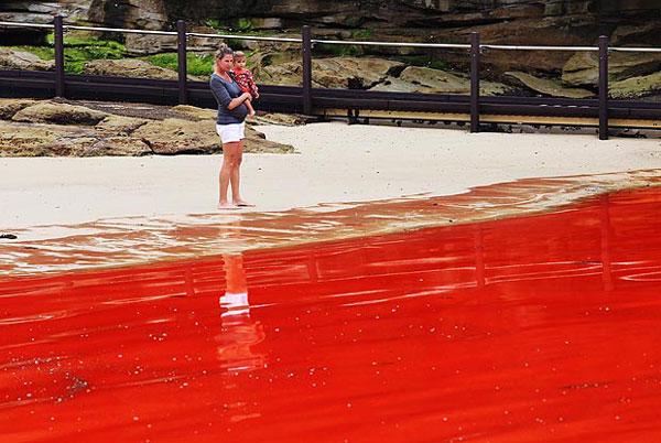 red-sea-australia-2