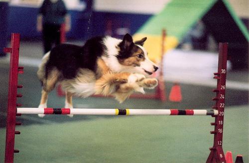 Perro saltando valla