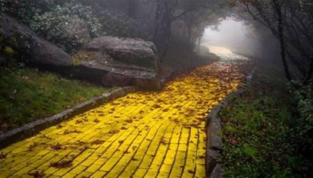 Camino baldosas amarillas bis
